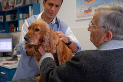 Consultation vétérinaire